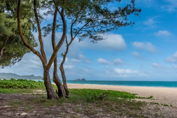 waimanlo beach and ironwood trees oahu windward coast in hawaii