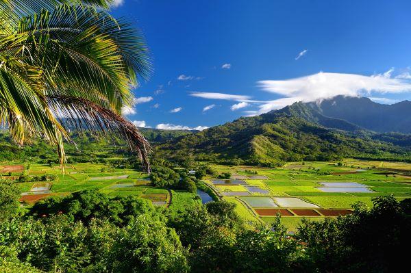 Hanalei valley taro fields on Kauai
