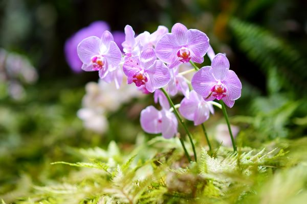 Orchids growing in a natural setting