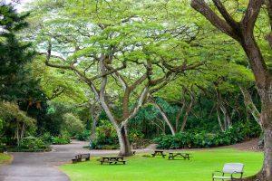 Waimea Valley botanical garden